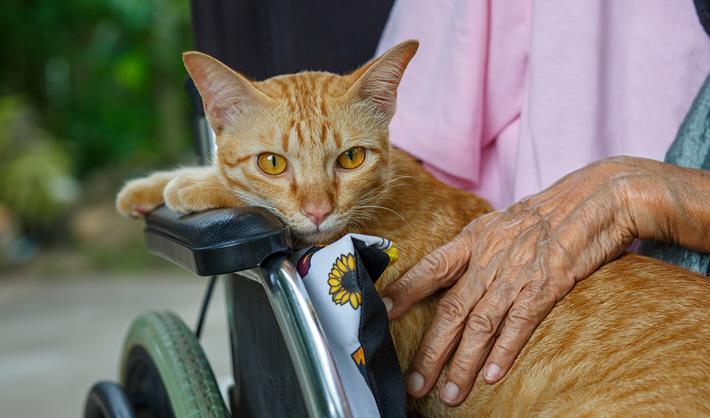 Terapia con gatos - curso terapia con animales
