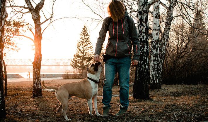 formación de adiestrador de perros en Granada