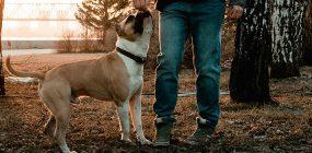 Curso Adiestramiento Canino Granada: tu futuro como adiestrador