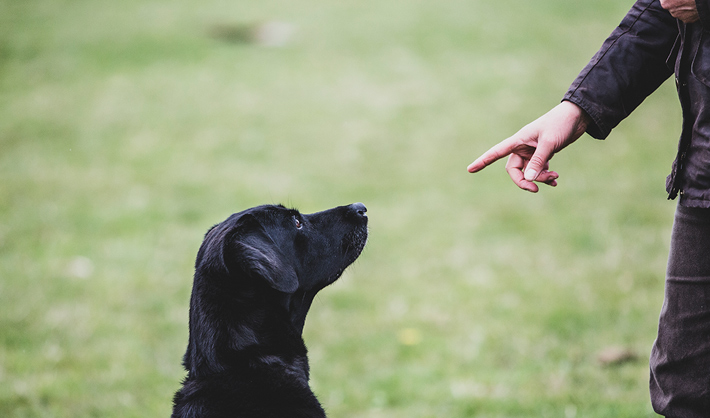 Curso Adiestramiento Canino Valencia – Campus Training