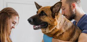 Curso Auxiliar Veterinaria Sevilla: tu formación veterinaria