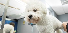 Curso Peluquería Canina Zaragoza: trabaja en estética canina
