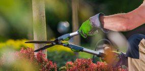 ¿Qué es la jardinería ecológica? La alternativa sostenible