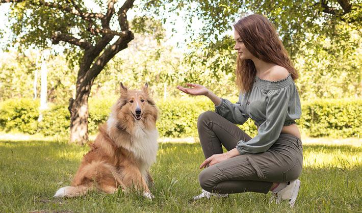 Curso Adiestramiento Canino Alicante - curso online