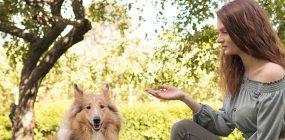 Curso Adiestramiento Canino Alicante: conviértete en adiestrador