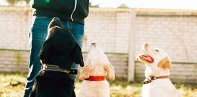 Curso adiestramiento canino Asturias: formación como adiestrador