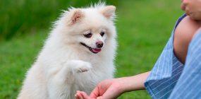 Curso Adiestramiento Canino Girona: formación para ser adiestrador