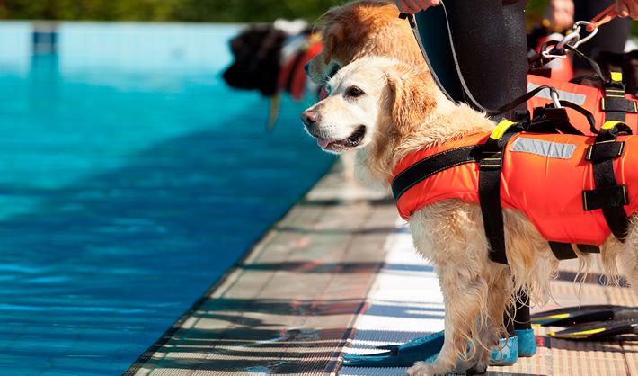 Guía canino – curso de Adiestrador Canino