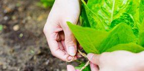 Agricultura ecológica, qué es