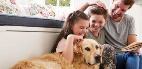 Descubre los mejores libros de adiestramiento canino