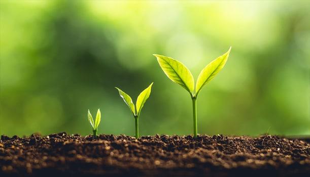 Técnico en aprovechamiento y conservación del medio natural, Técnico en aprovechamiento y conservación del medio natural a distancia