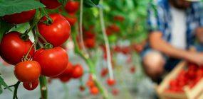 Descubre la diferencia entre agricultura orgánica y ecológica