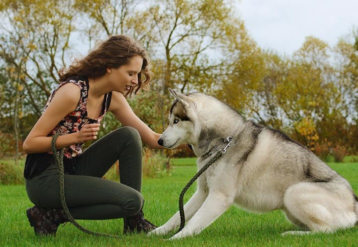 cómo ser adiestrador de perros|