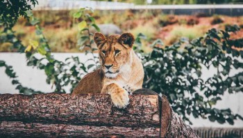 Cómo trabajar en un zoológico