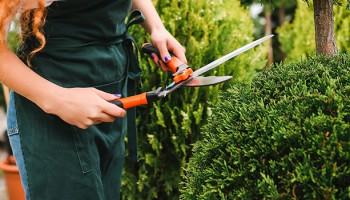 Curso de jardinería: diseña el jardín ideal
