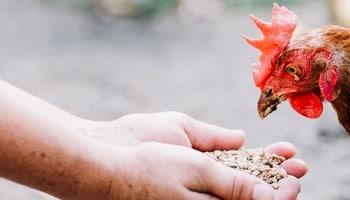 Conviértete en Especialista en Dietética Veterinaria con el curso de Nutrición Animal