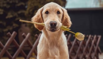 Curso Terapia Asistida con Animales online. ¡Estudia desde casa!