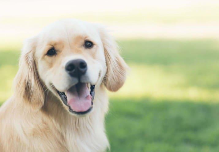 curso terapia asistida con animales valencia, Curso Terapia Asistida con Animales Valencia. ¡Tu oportunidad!