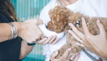 Cursos de veterinaria online: fórmate a distancia