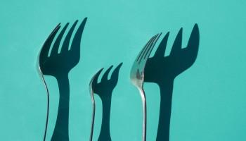 ¿Dónde estudiar nutrición y dietética? Toda tu oferta formativa
