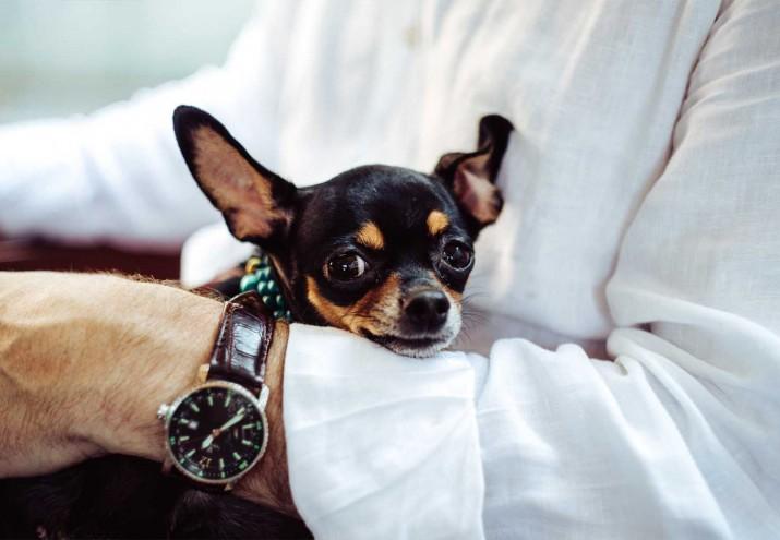 Dónde estudiar terapia asistida con animales, Dónde estudiar terapia asistida con animales: una profesión de futuro