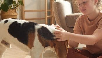 La Educación Asistida con Animales: intervenciones pedagógicas