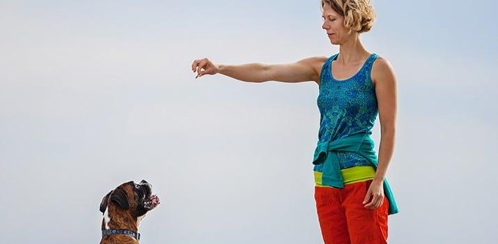 Educación canina en positivo – curso de Adiestramiento|Educación canina en positivo – curso de Adiestramiento