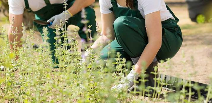 escuela de jardinería - estudiar jardinería|