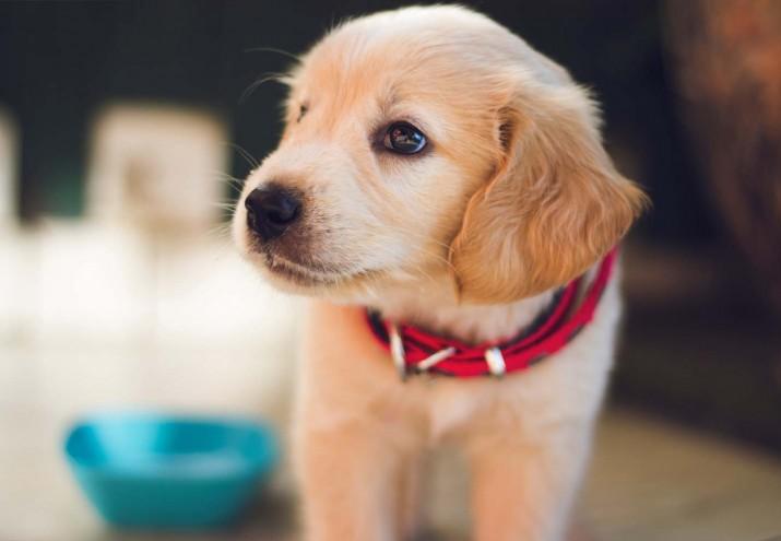 estudiar veterinaria a distancia, Estudiar Veterinaria a distancia: elige la mejor formación
