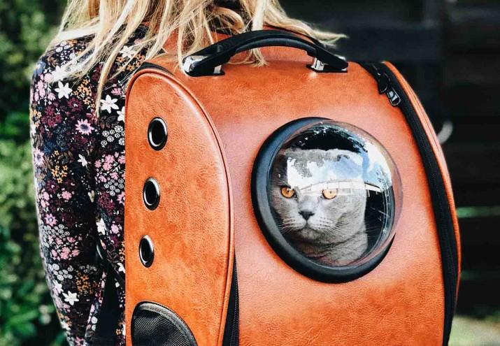 estudios de veterinaria, Estudios de Veterinaria: tus opciones para trabajar con animales