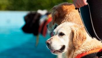 Guía canino – curso de Adiestrador Canino|Guía canino – curso de Adiestrador Canino