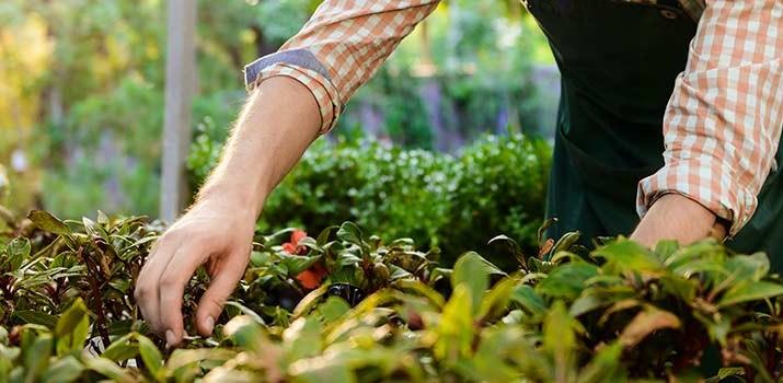 qué es un jardinero - estudiar jardinería|qué es un jardinero - estudiar jardinería