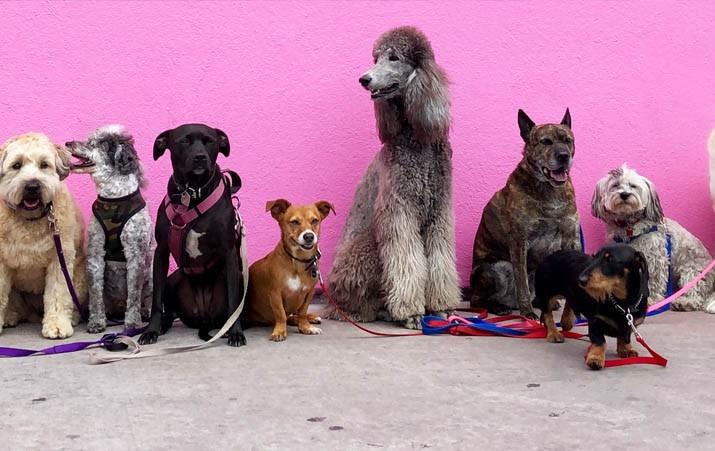 requisitos para ser adiestrador canino, Requisitos para ser adiestrador canino