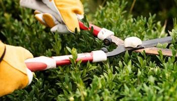 Requisitos para ser jardinero