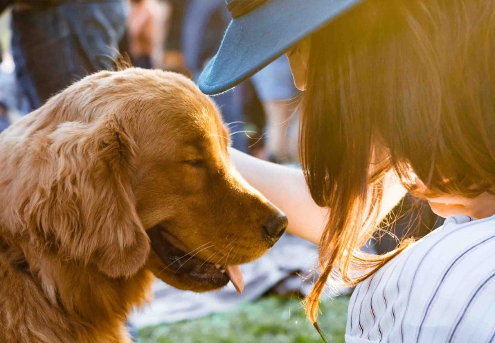 Sueldo adiestrador canino, Sueldo adiestrador canino: lo que gana un adiestrador de perros