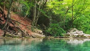 Actividades que realizarás como Técnico Superior en Gestión Forestal y del Medio Natural