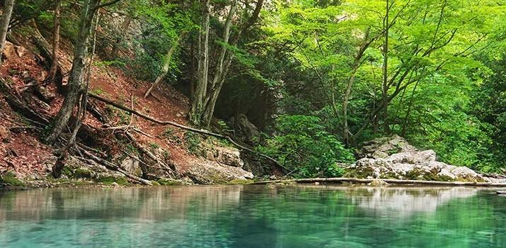 técnico superior en gestión forestal y del medio natural|técnico superior en gestión forestal y del medio natural formación