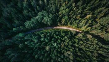 Temario agente forestal Madrid: descrubre los temas