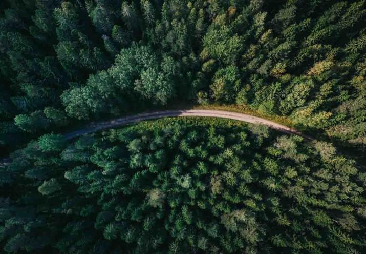 temario agente forestal madrid, Temario agente forestal Madrid: descrubre los temas