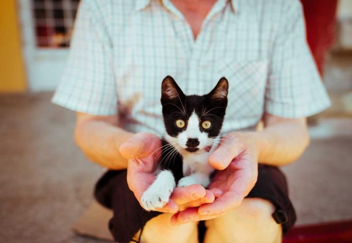 terapia asistida con animales barcelona, Curso de Terapia asistida con animales Barcelona. ¡Fórmate en tu vocación!