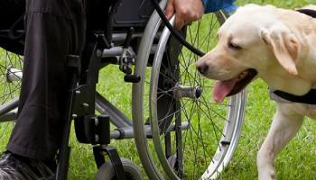 Beneficios de la terapia asistida con perros