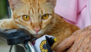 La terapia con gatos: beneficios de la gatoterapia