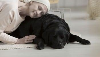 Campus Training Santiago: Terapia Asistida con Animales