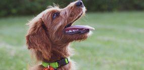 Fundamentos del adiestramiento: órdenes para perros