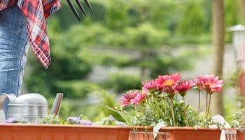 Perfil profesional de un jardinero: habilidades y competencias