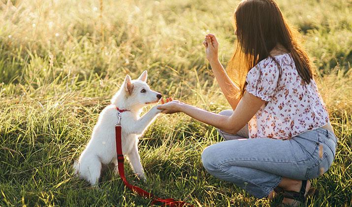 curso adiestramiento canino precio