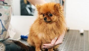 Precio curso peluquería canina
