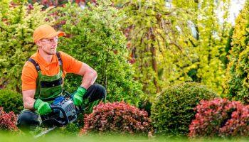 Precio curso jardinería, ¿cuánto pagar por la formación?