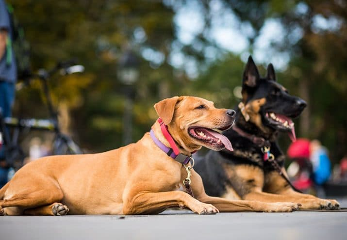 estudiar adiestramiento canino
