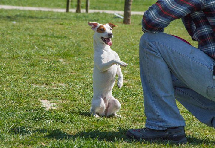 sueldo adiestrador canino